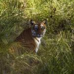 Pénétrez dans la jungle du célèbre Chitwan National Park