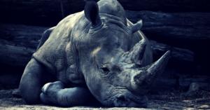 Népal et ses attraits - parc national chitwan