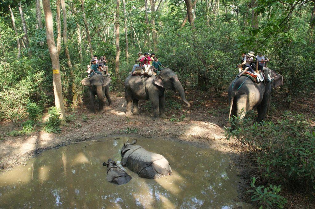 les rhinocéros au parc national de Chitwan